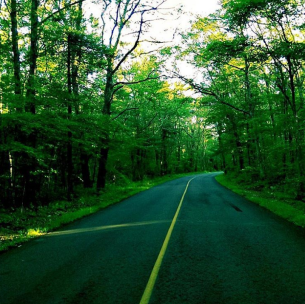 """No matter what the road ahead brings to your life, be sure to keep going forward"" #road #trees #forest #sunlight #sky #Motivation #LiveTheLifeYouWant #worldkcday"